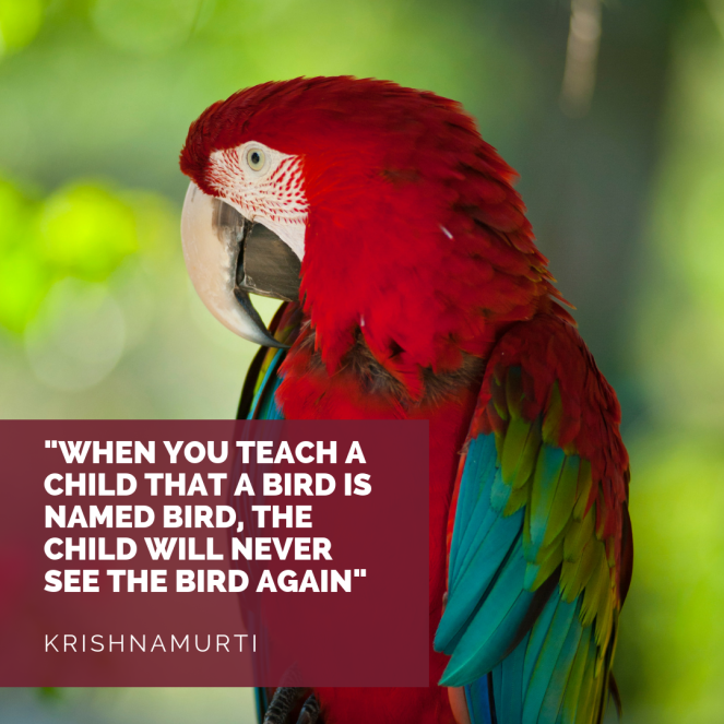 Red parrot with Quote by Krishnamurti