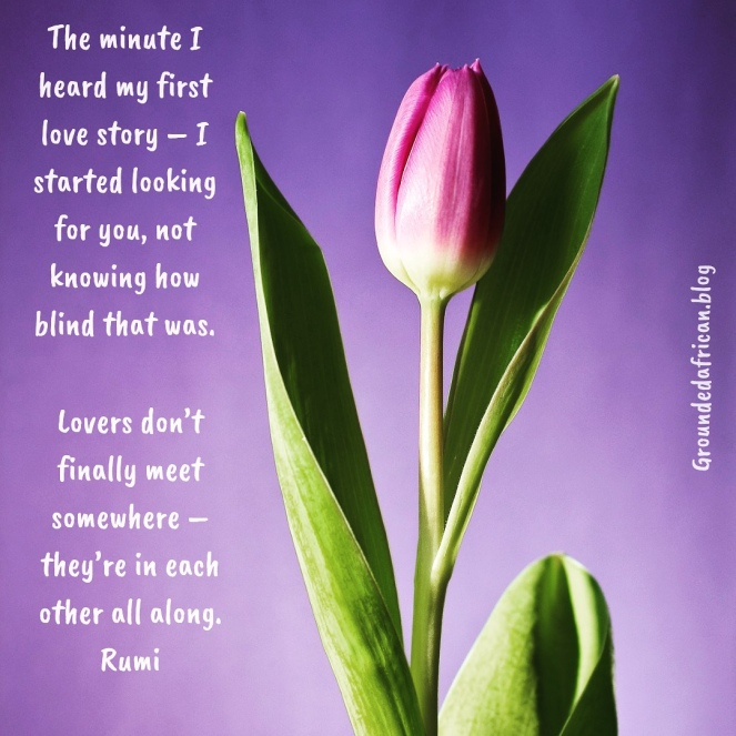 Tulip bud. Purple background. Quote by Rumi