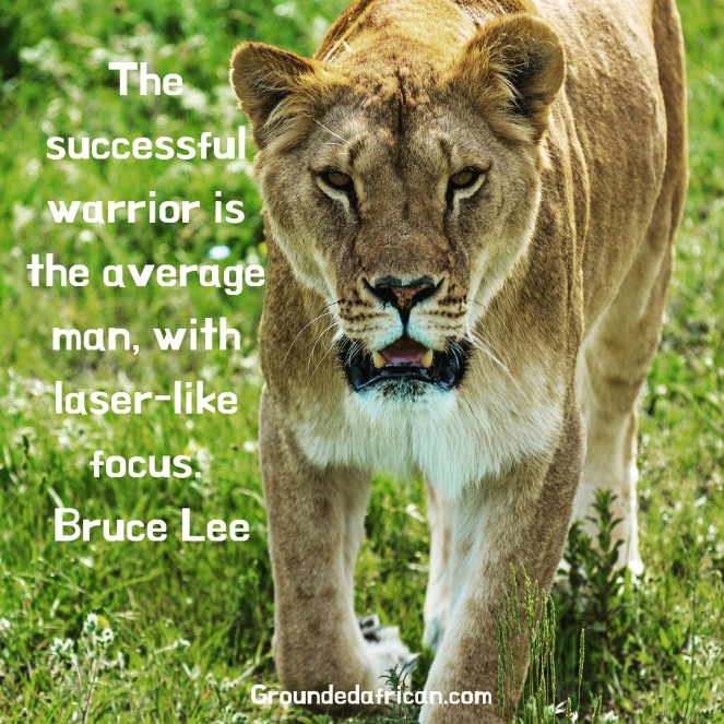 Female lion prowling in green grass. Quote by Bruce Lee re: laser-focus