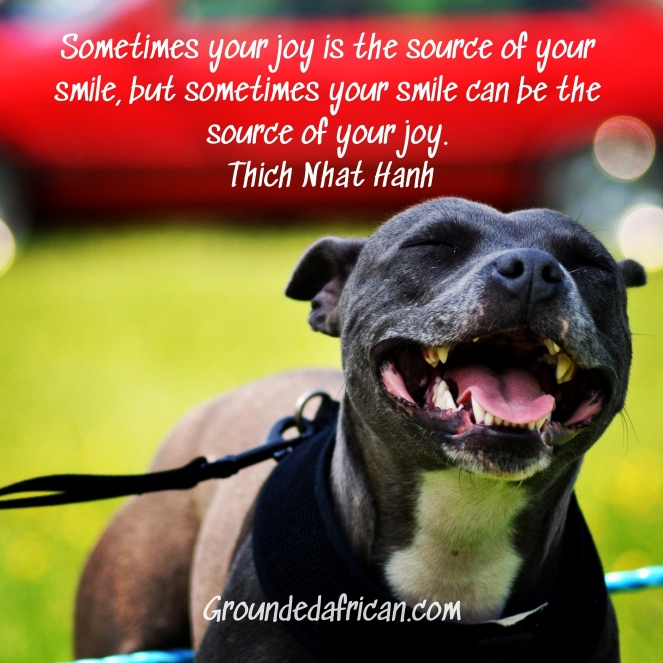 Dog smiling. Quote by Thich Naht Hanh