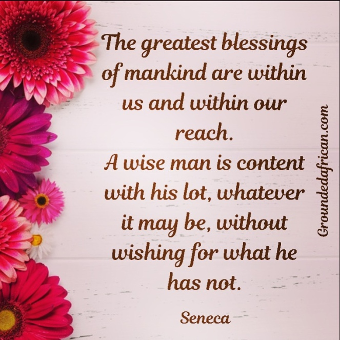 Pink daisies. Quote by Seneca