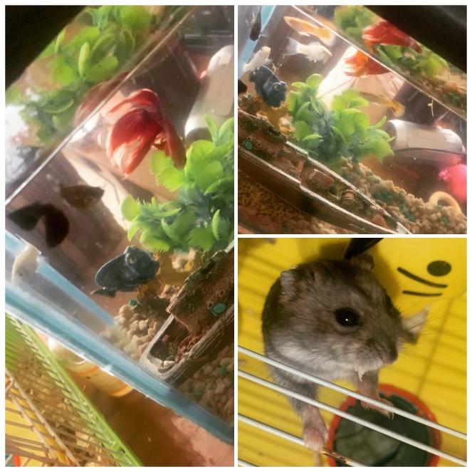 Fish + hamster